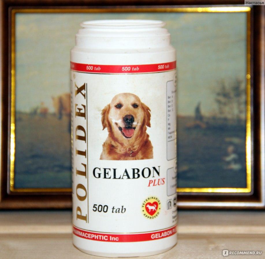 гелабон плюс для собак инструкция - фото 8