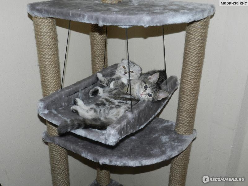 Как сделать когтеточку для кошки с гамаком