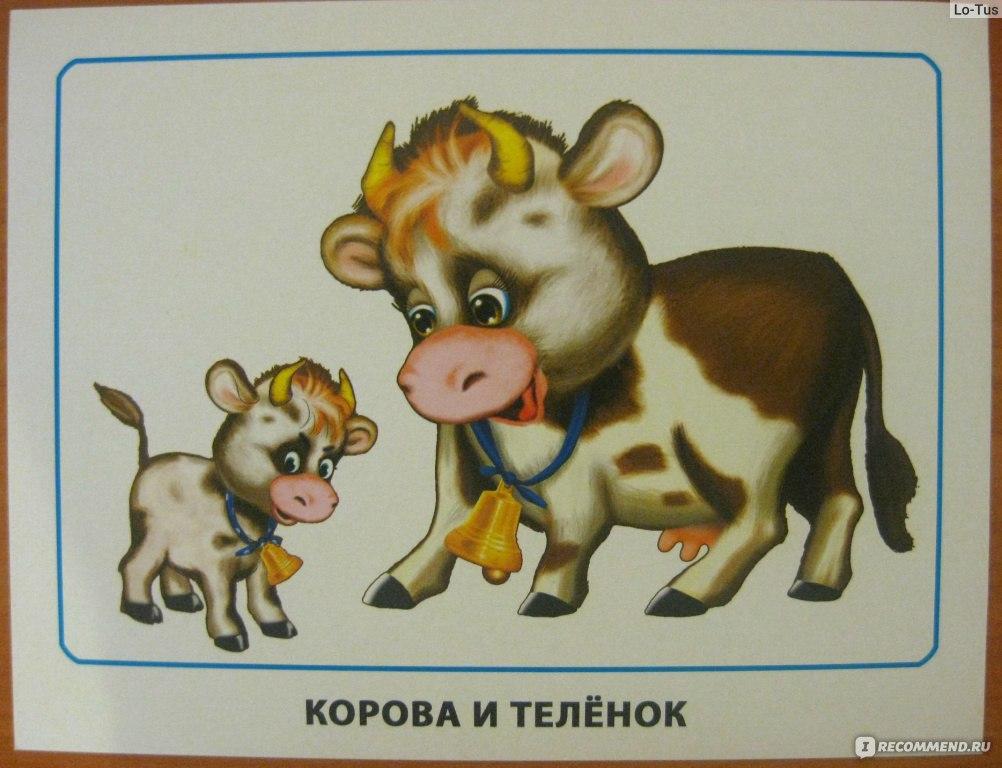 цветов картинки для малышей мама и детеныш билеты эрмитажзаранее