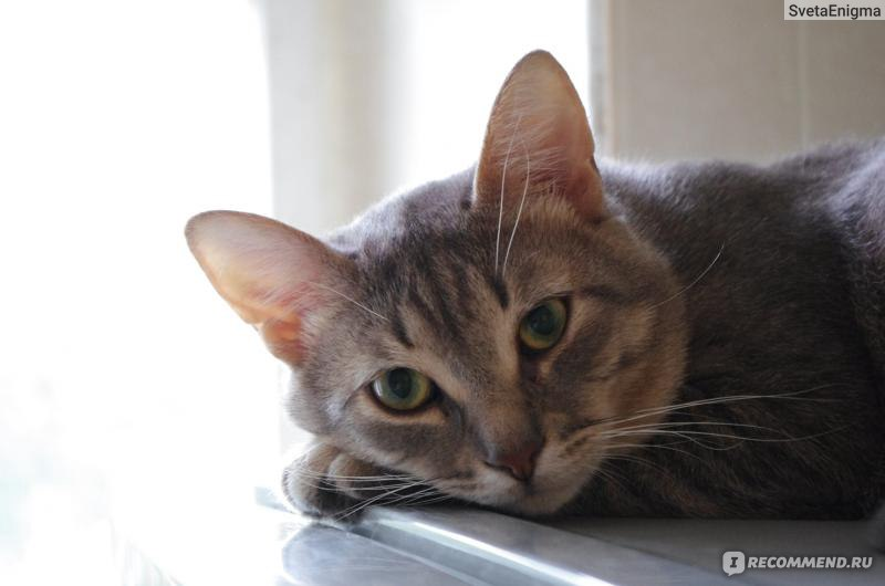 Можно ли капать левомицетин в глаза коту в