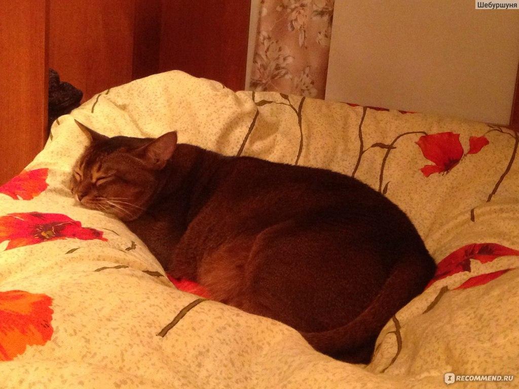 Гипоаллергенная диета для кошек