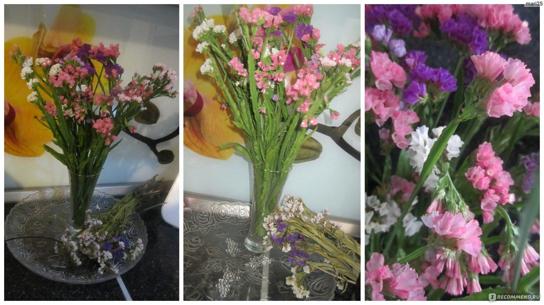 Сухоцветы статица выращивание 92