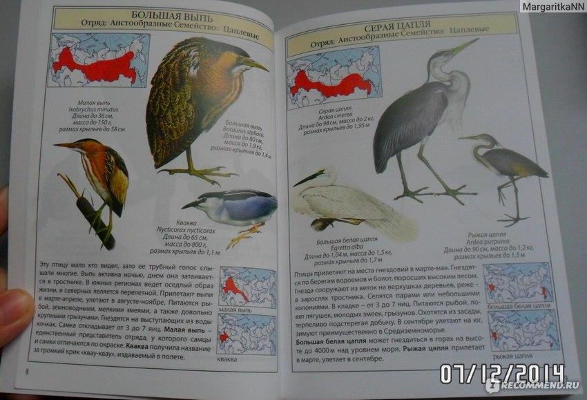 Энциклопедия птиц россии с