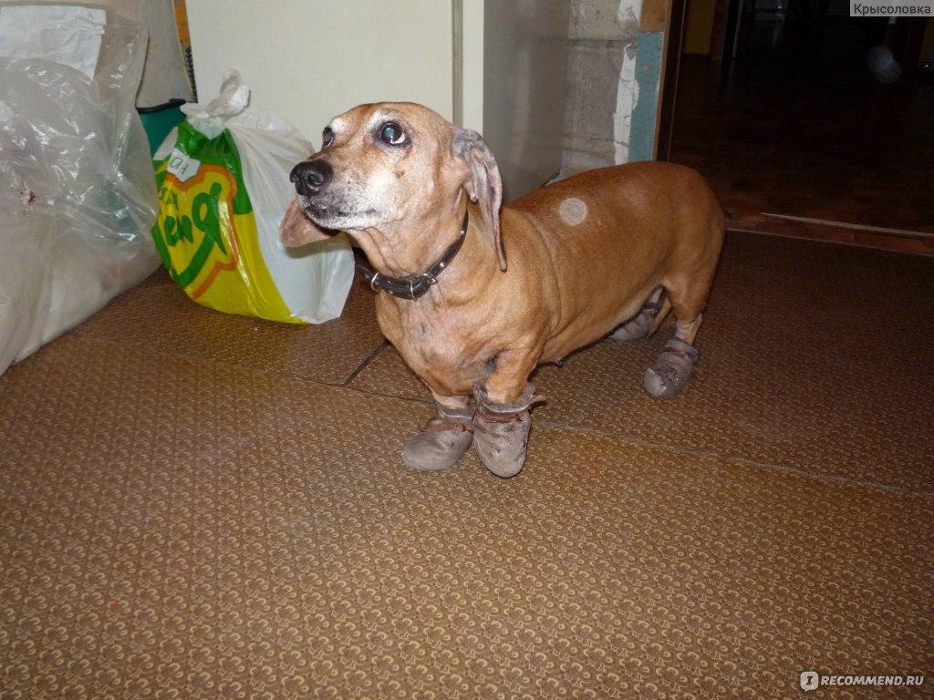 Черный акантоз у собак