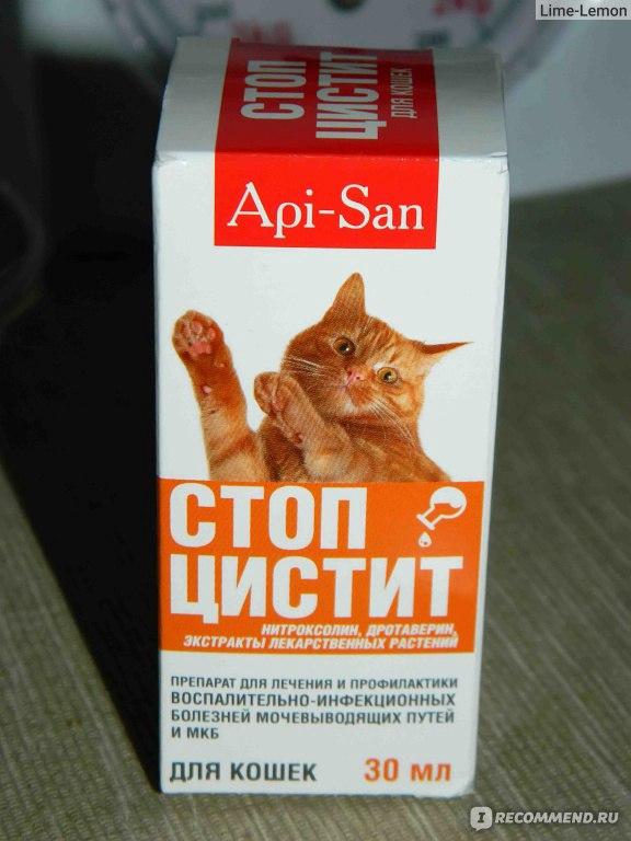 У котенка цистит лечение