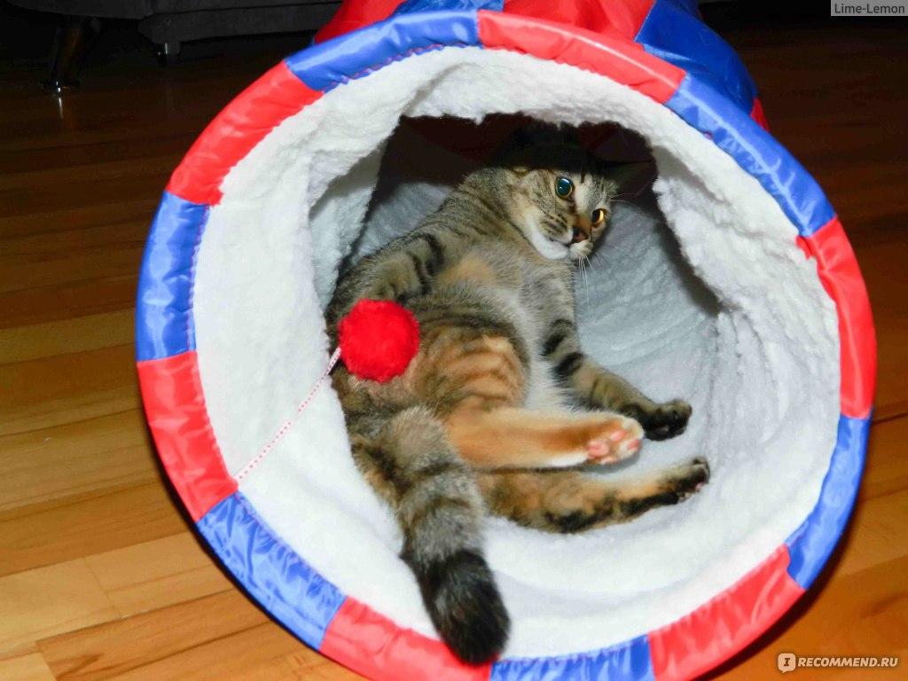 Своими руками тоннель для кошки 80