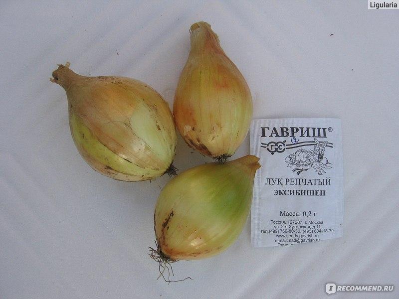 Лук сибирский однолетний выращивание 89