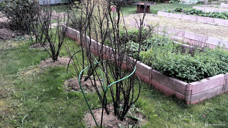 Ограждение ягодных кустарников - для выделения сортовых 47