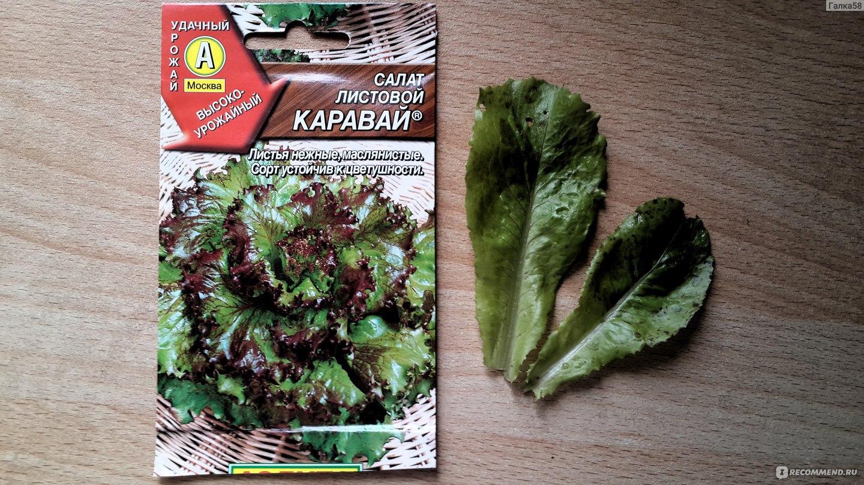 Салат листовой его виды фото