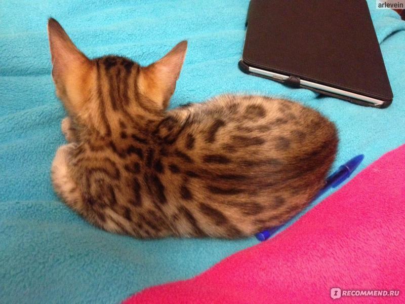 Кот постоянно сидит на своем туалете