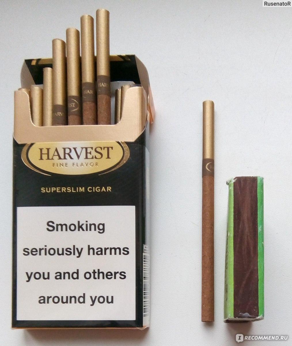 Купить сигареты харвест в ижевске сигареты esse купить оптом в москве