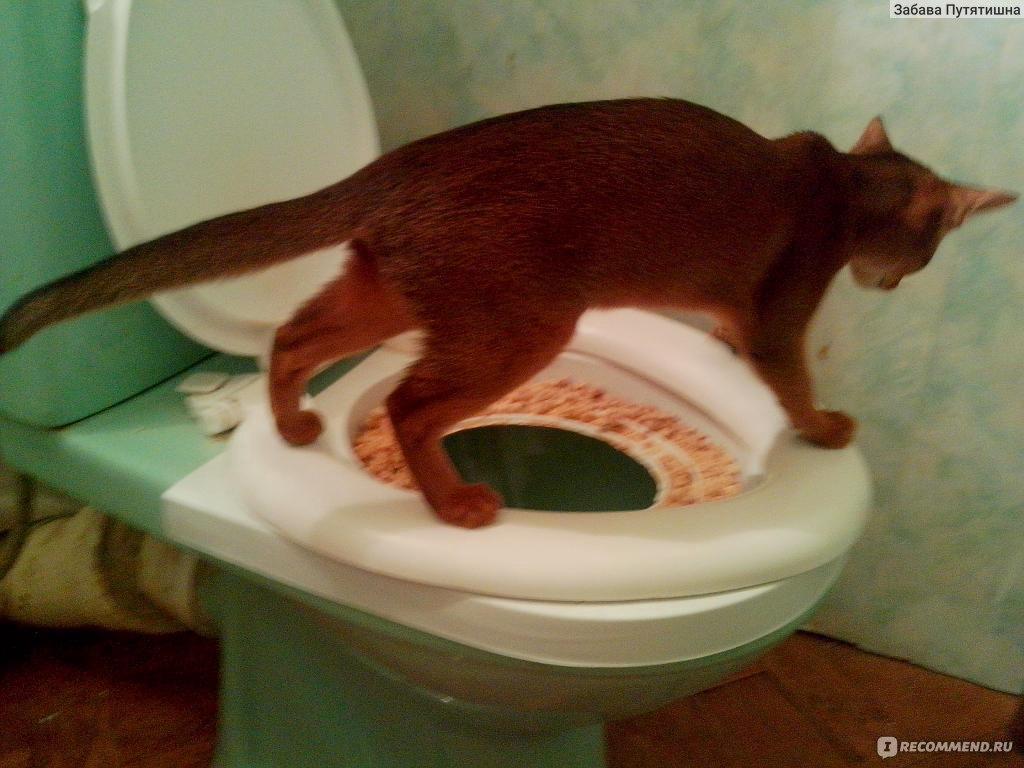 Лоток для приучения кота к унитазу своими руками 25