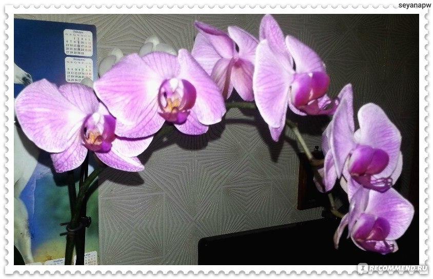 Скачать книгу как ухаживать за орхидеями бесплатно