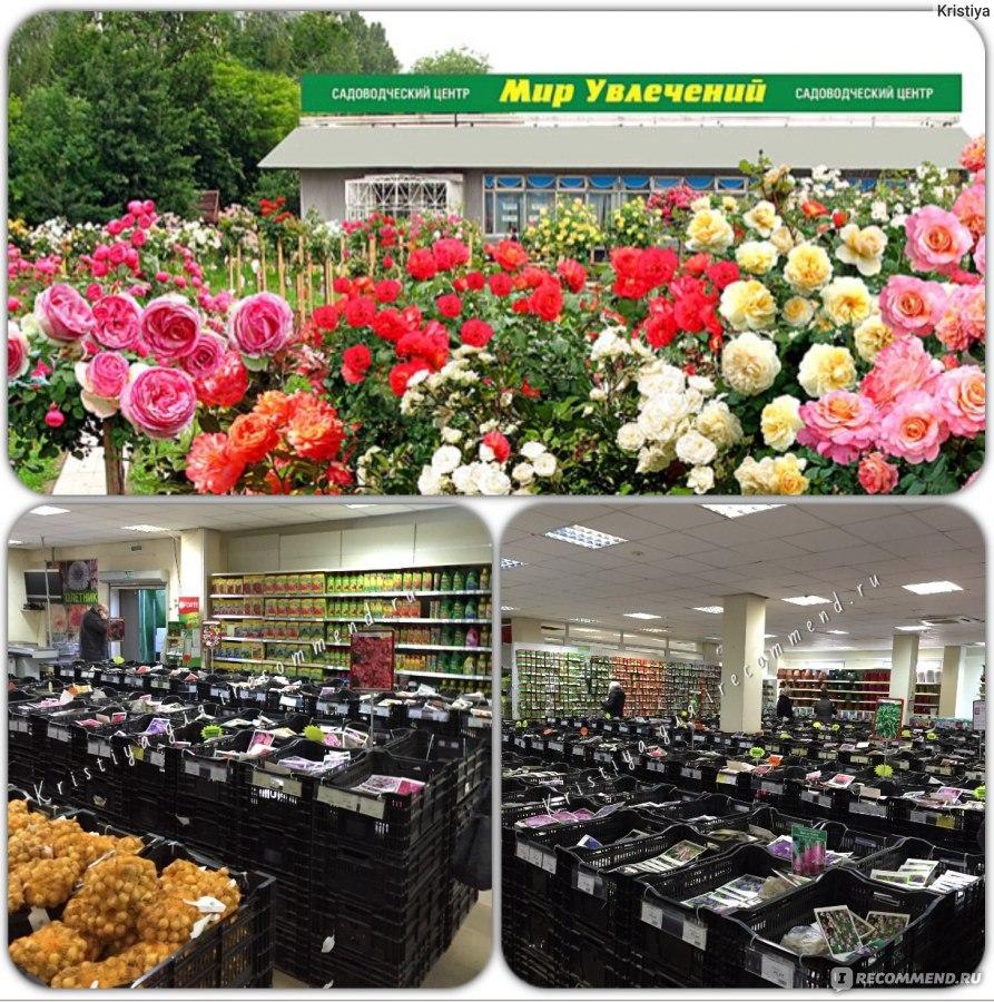 Цветы в магазинах мир увлечений, военную