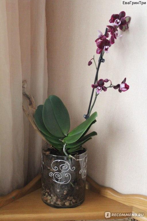 Как правильно сажать орхидею в горшок 70