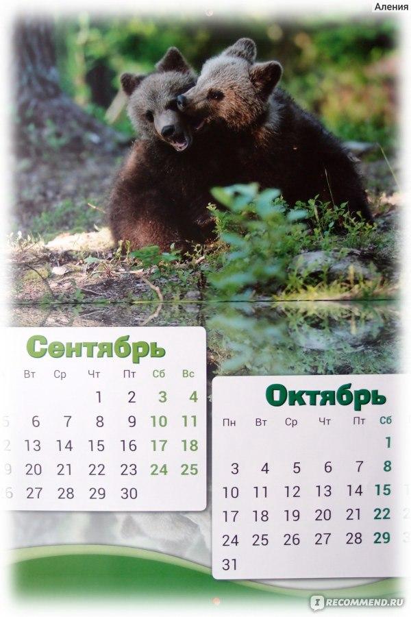Кубок россии по ралли 2017 календарь