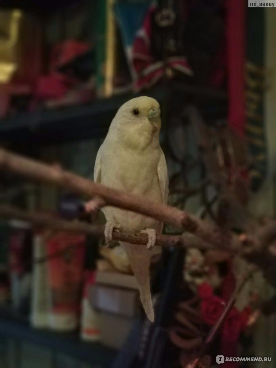 сказки старого попугая фото хватает теснота, маленький