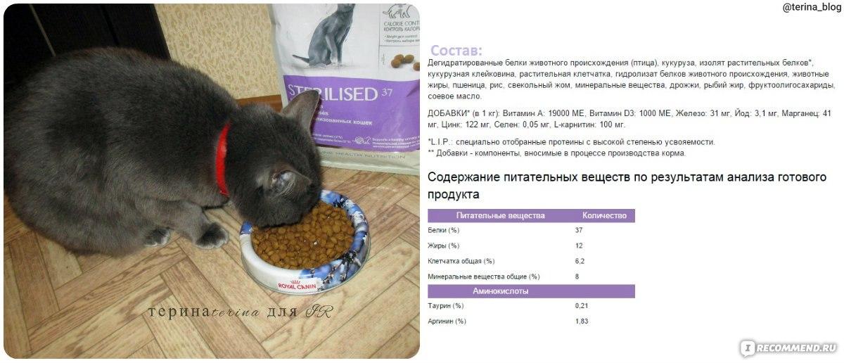 Корм royal canin для котят суточная норма