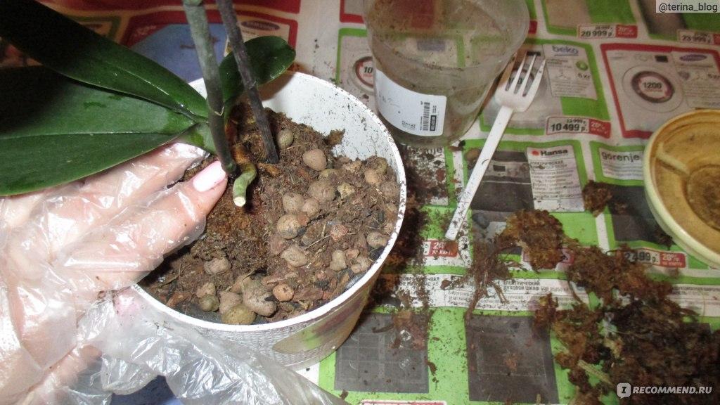 Как и из чего приготовить грунт для орхидей своими руками