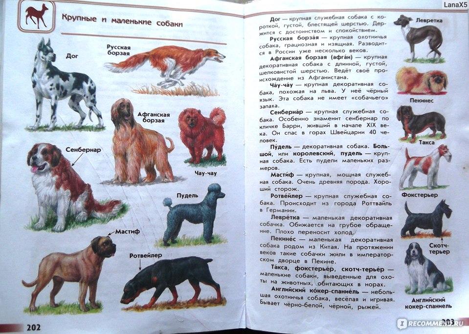 Определи породы собак с помощью атласа-определителя подпиши рисунки