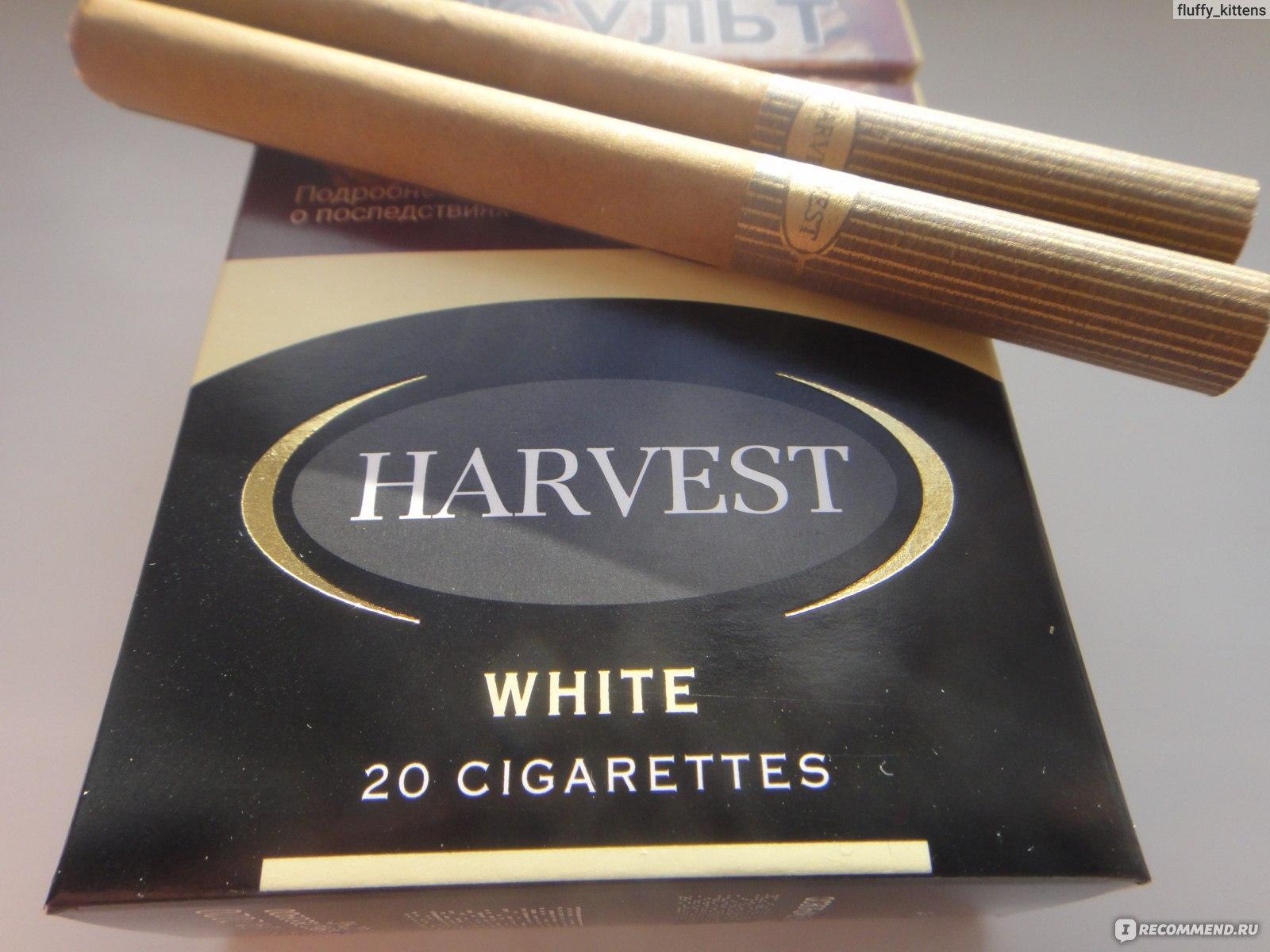 Сигареты харвест где можно купить сигареты оптом шымкент