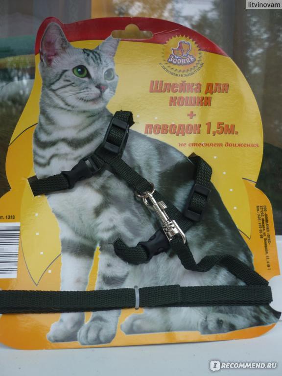 """Шлейка для кошки ЗООНИК - """"Удобно. Безопасно."""" Отзывы покупателей"""