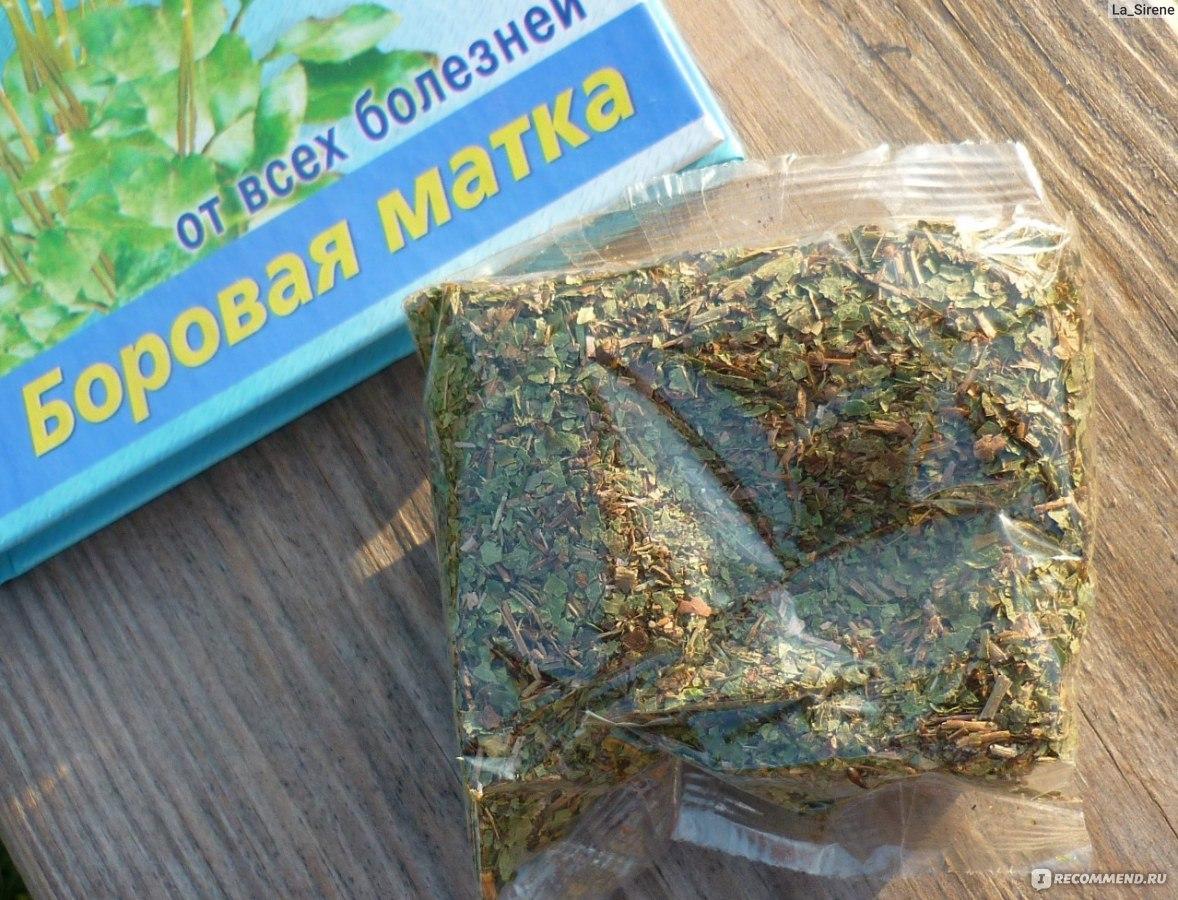 Как приготовить настойку из боровой матки на водке