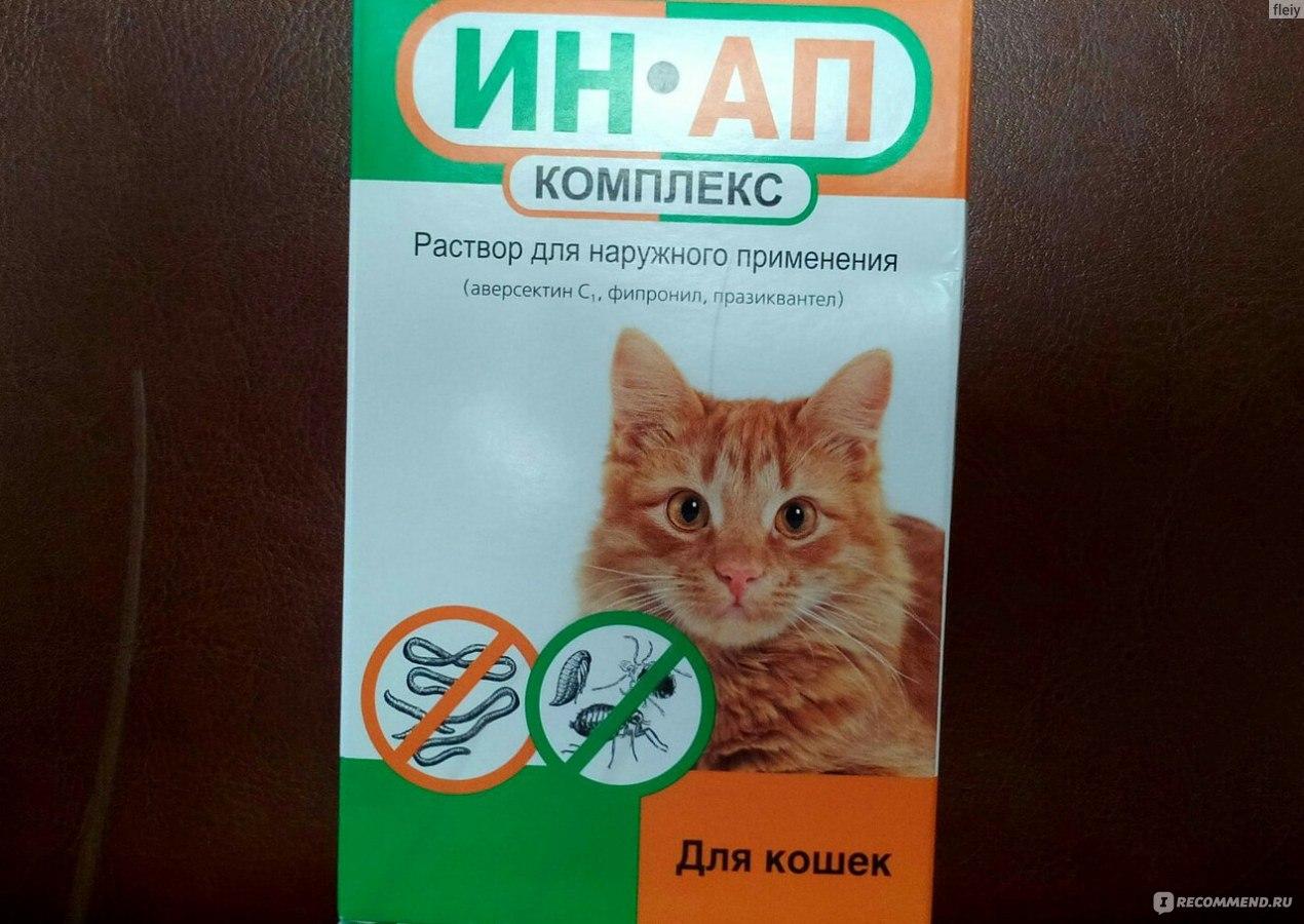 Чем вылечить кошку от глистов в домашних условиях