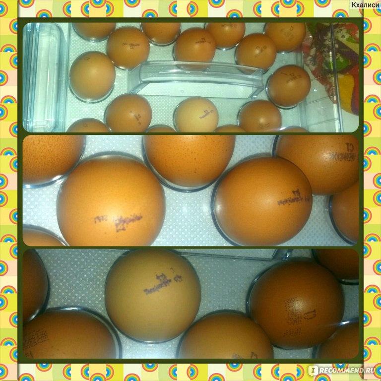 262Почему в курином яйце кровь в белке
