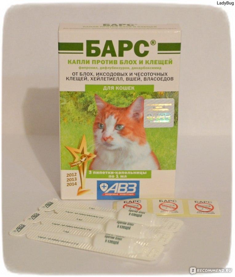 От глистов для кошек в домашних условиях