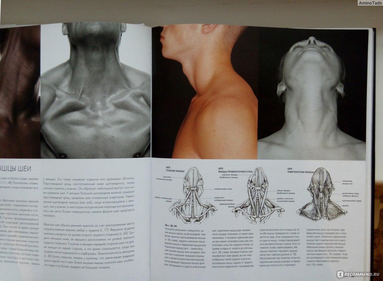 Анатомия для художников. Сара симблет «одна из лучших настольных.
