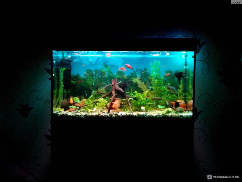 Как сделать в аквариуме красивое освещение