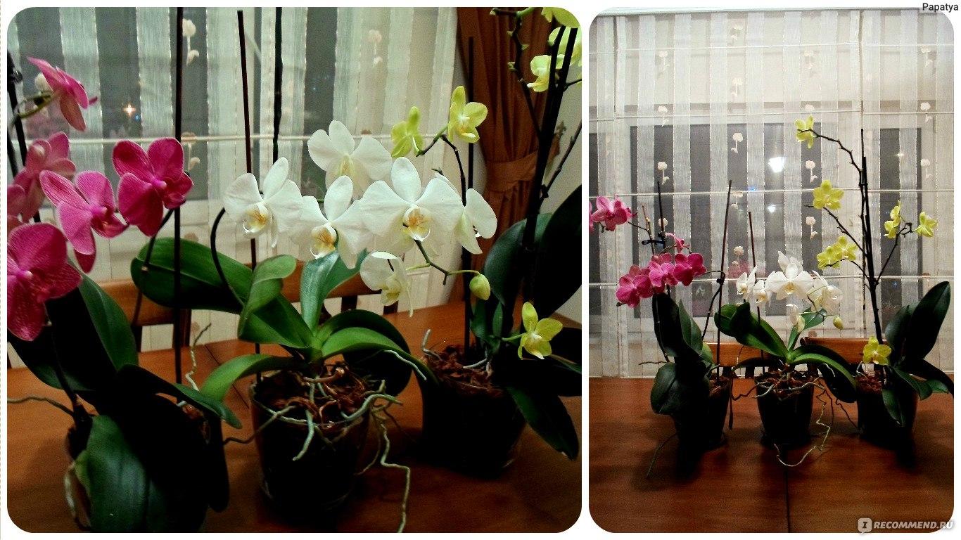 Выращивание орхидей в домашних 1