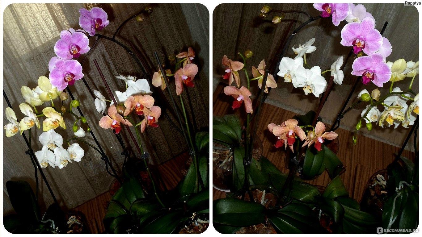 Выращивание орхидей. Уход за орхидеей в домашних условиях 79