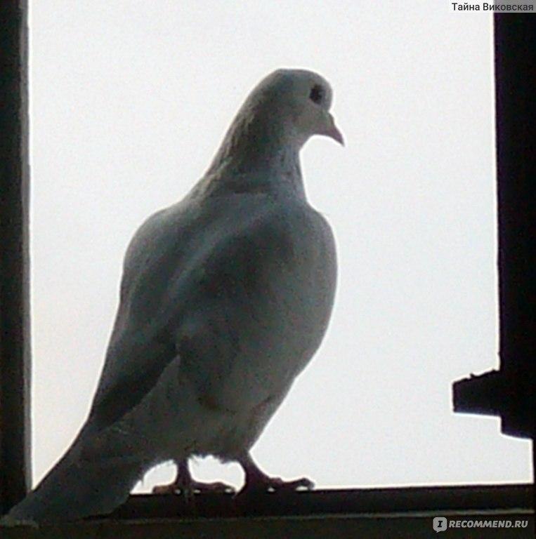 """Голубь - """"прилетел белый голубь, когда ждать вестей? стоит л."""