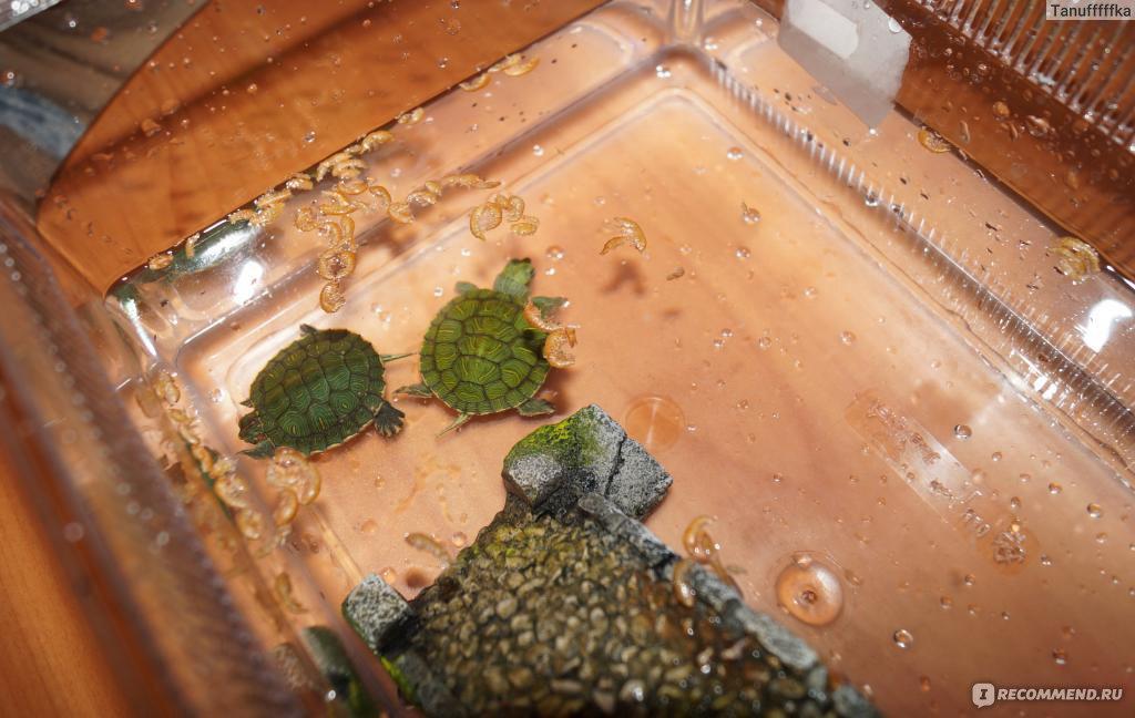 Игрушки для черепах красноухих