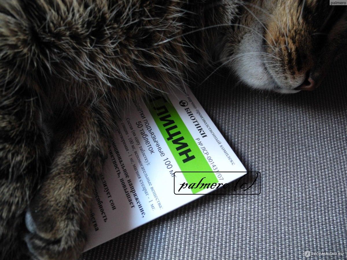 Можно ли глицин котам
