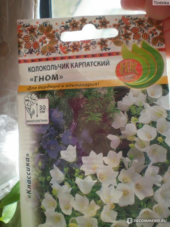 Колокольчик карпатский - о выращивании из семян в домашних условиях