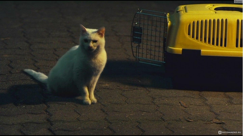 Смотреть фильм кот глаза которые видят