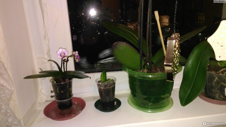 Как рассаживать орхидею в домашних условиях пошаговое фото