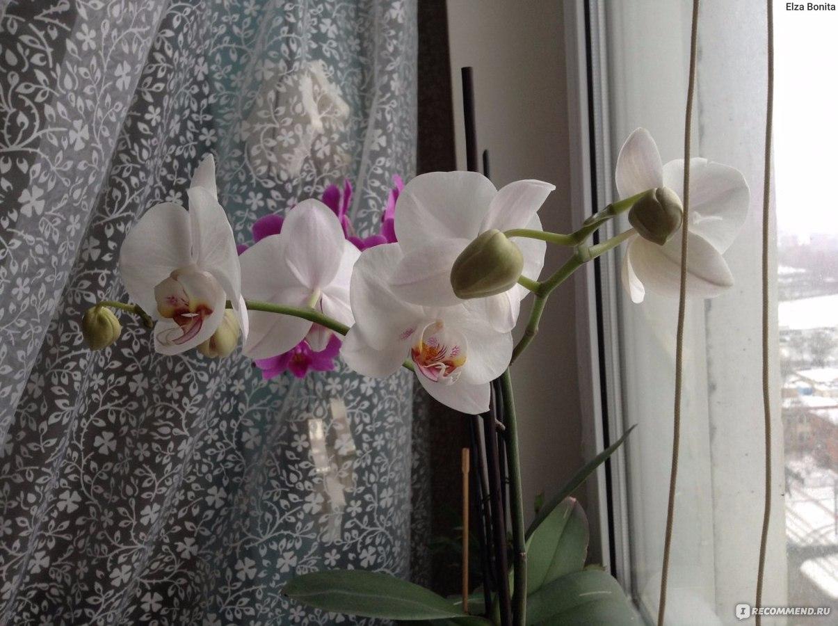 Когда, как и чем подкармливать орхидею фаленопсис 45