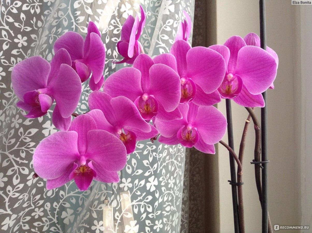 Выращивание орхидей. Уход за орхидеей в домашних условиях 50