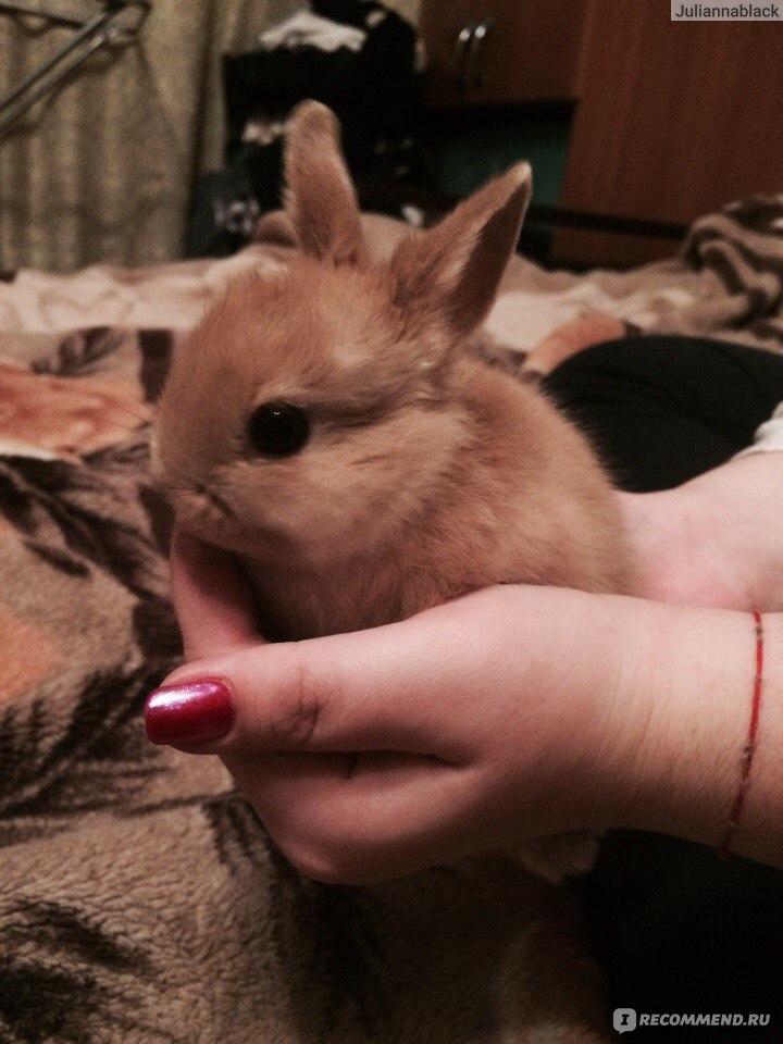 Кролики декоративные лижет все подряд