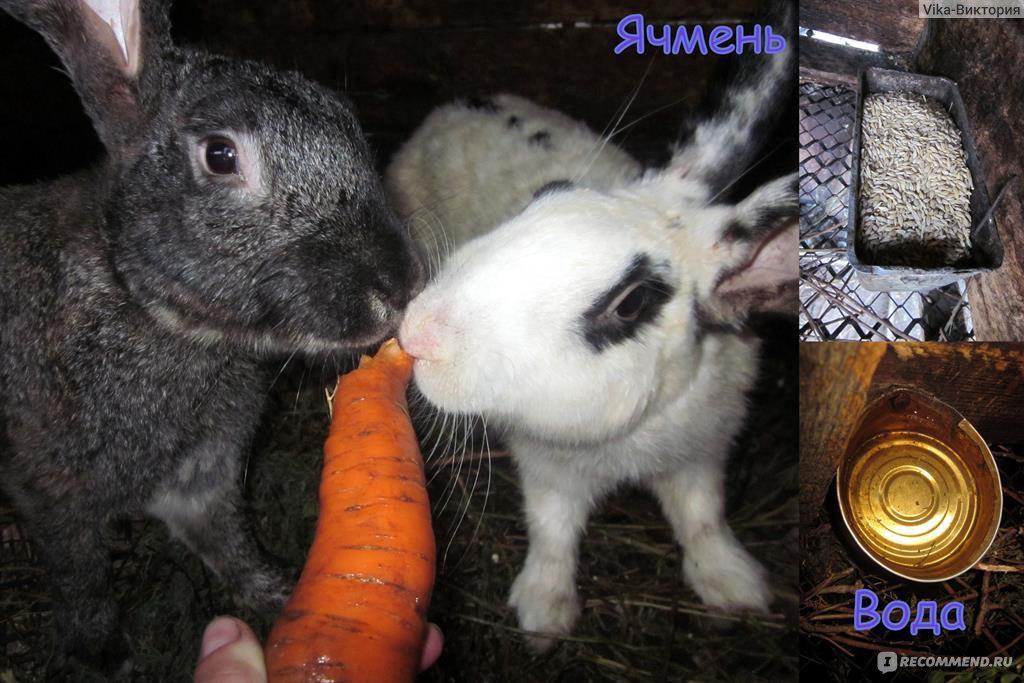 От холода кролики могут умереть отзывы