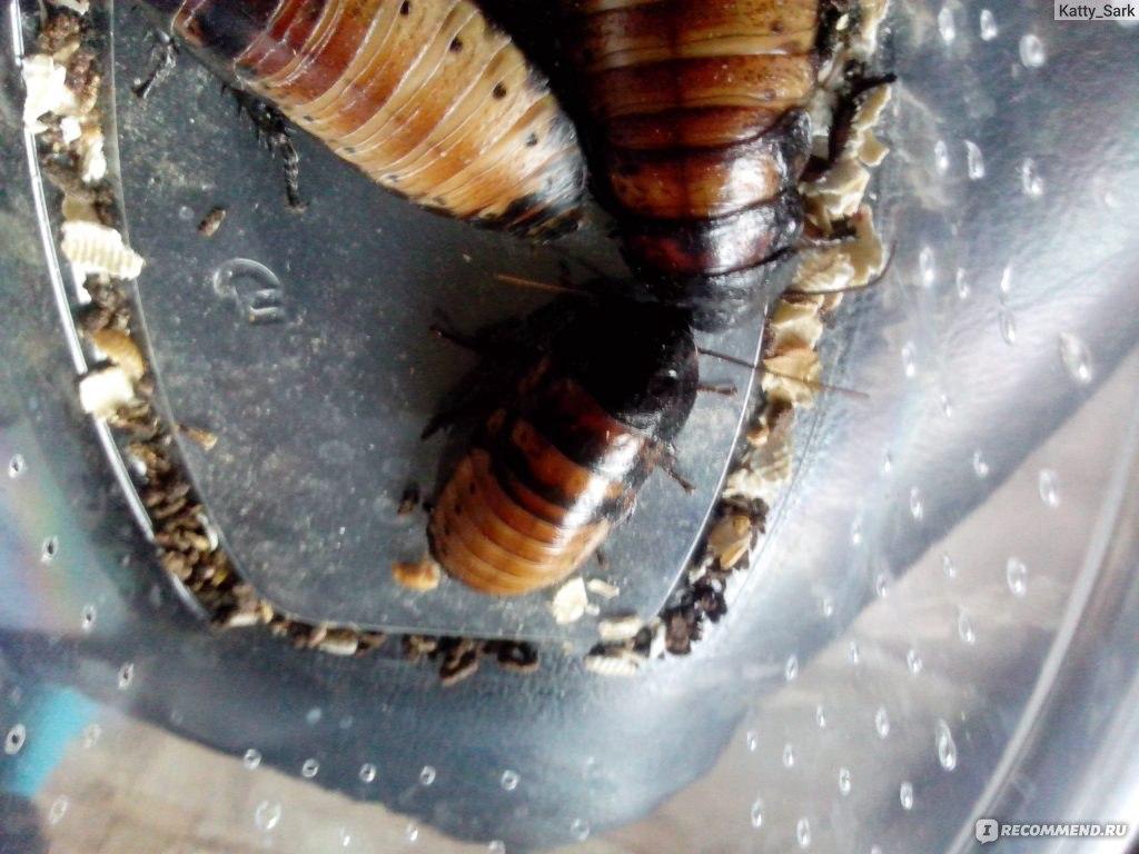 Борьба с тараканами своими руками