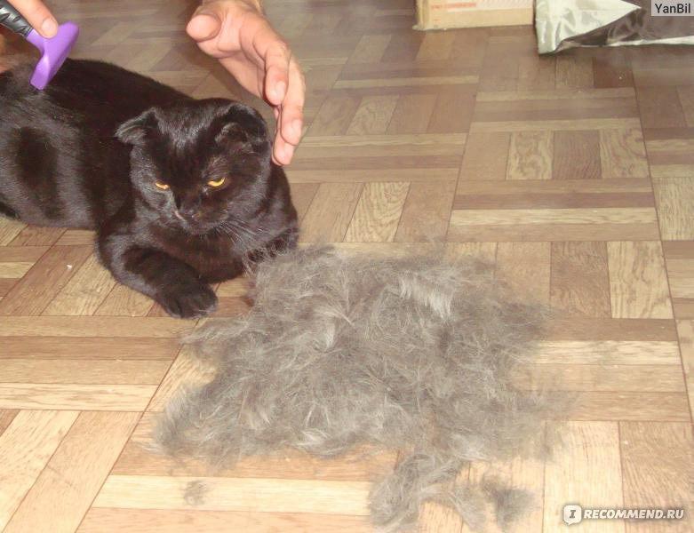 фурминатор для кошек фото до и после один
