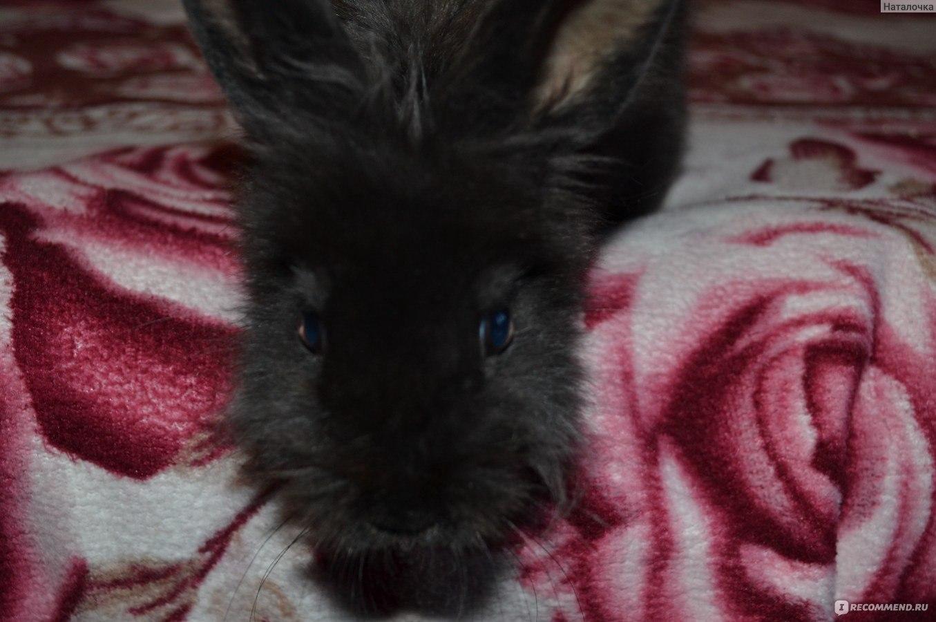 Декоративные кролики 39