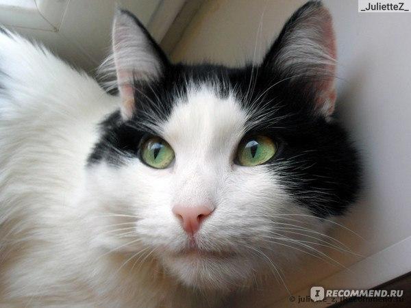 Что за кот в рекламе дримис