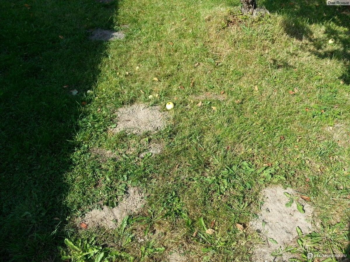 Эффективная борьба с кротами на садовом участке