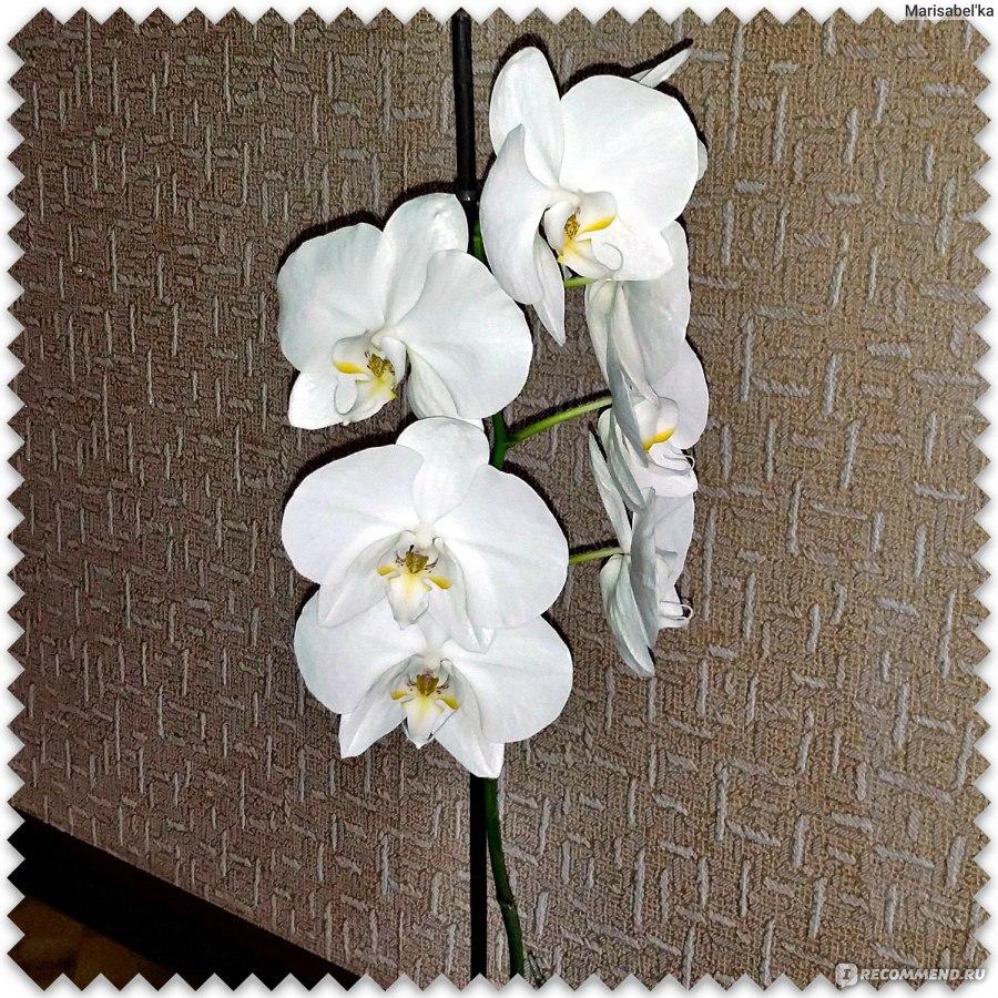 Цветок который цветет раз в 7 лет